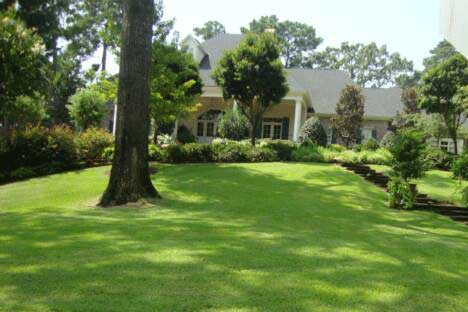 Tree-Shaded-Lawn