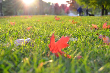 Fall Leaves On a Lawn should be reomoved to protect the lawn