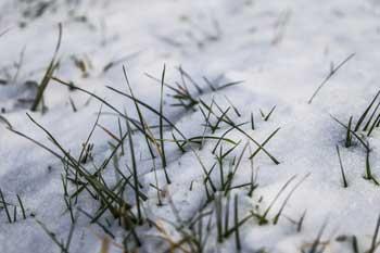 Lawn Care in Snow