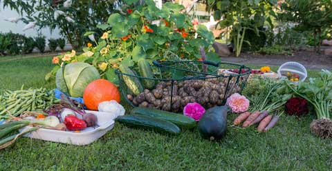 Delicious Vegetables from following winter garden tips