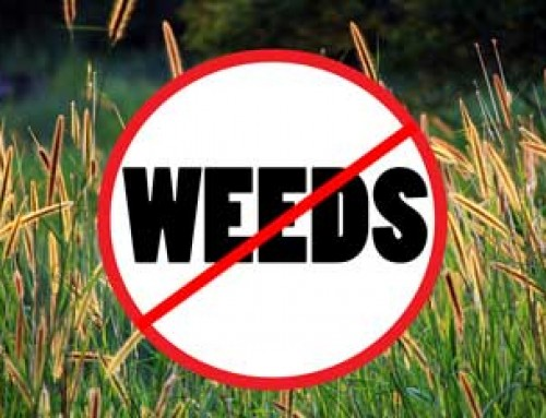Choose Grass Seed Wisely