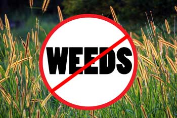 choose grass seed wisely for no weeds