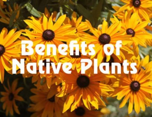 Benefits of Native Plants