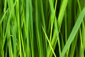 Get to Know Your Grass Type