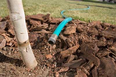 Proper Tree Watering